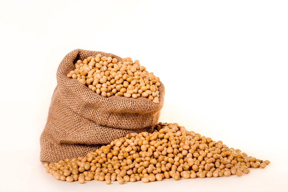 fazole v pytli